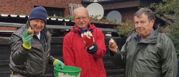 Der Vorstand der Tennisabteilung pflanzt Tulpenzwiebeln auf der Tennisanlage und am Sportpark